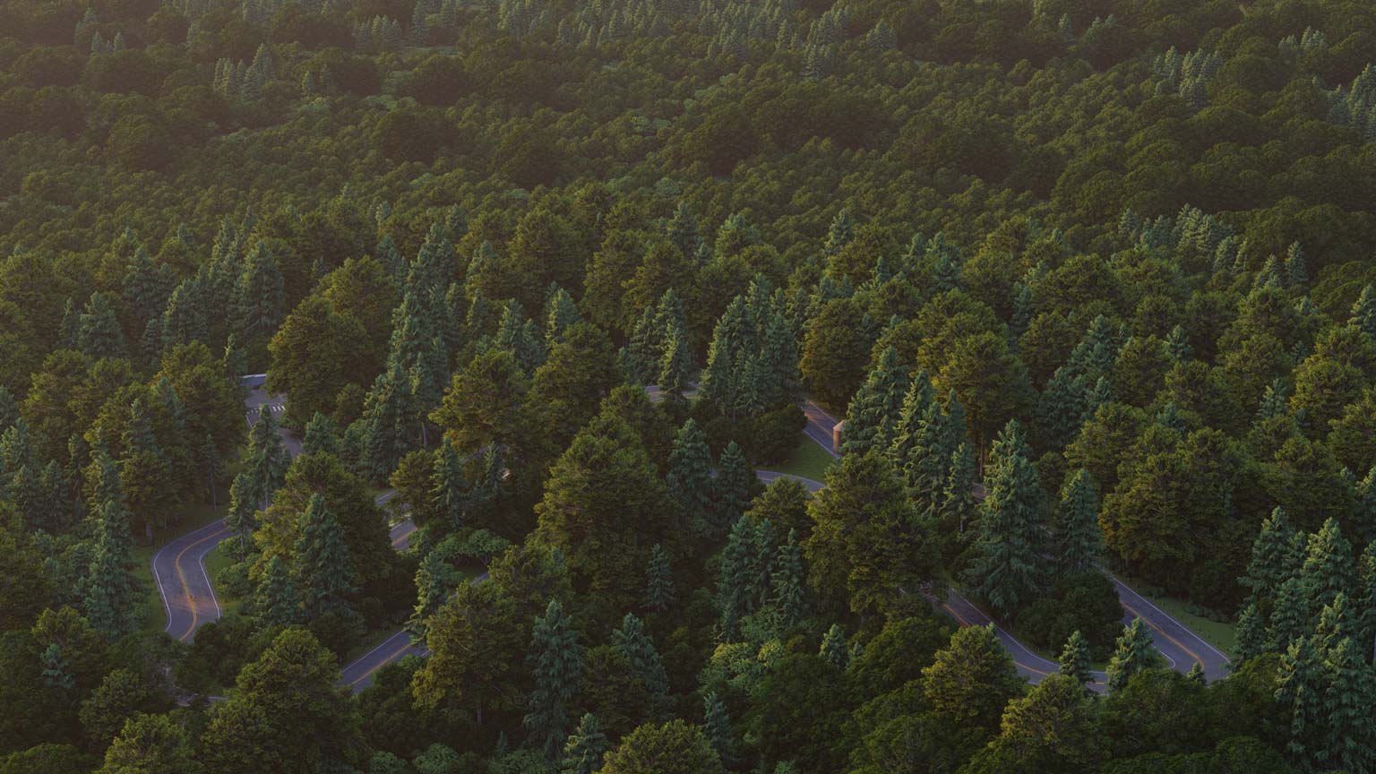 Forest-1536x864_Lumion10